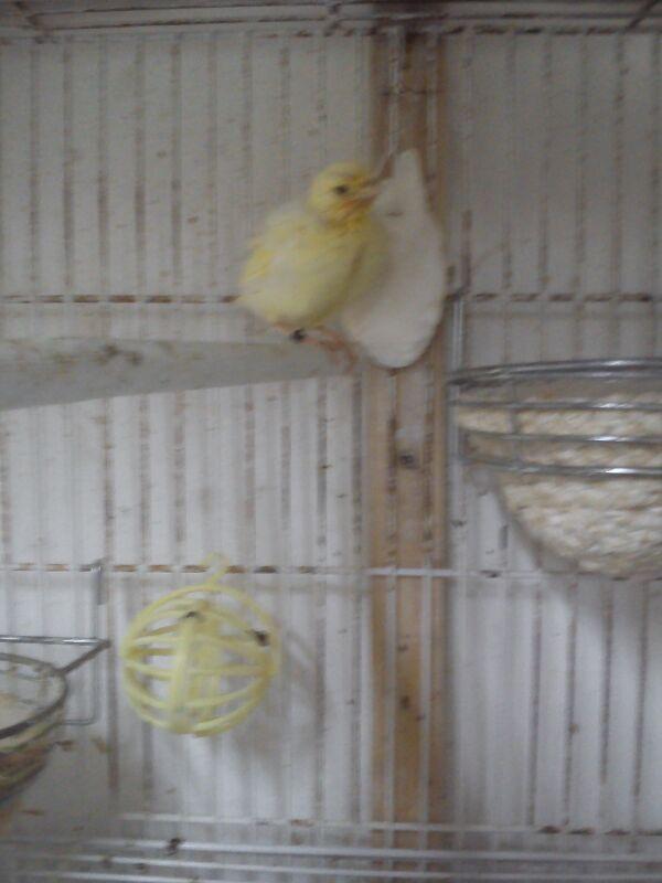Ya salio del nido