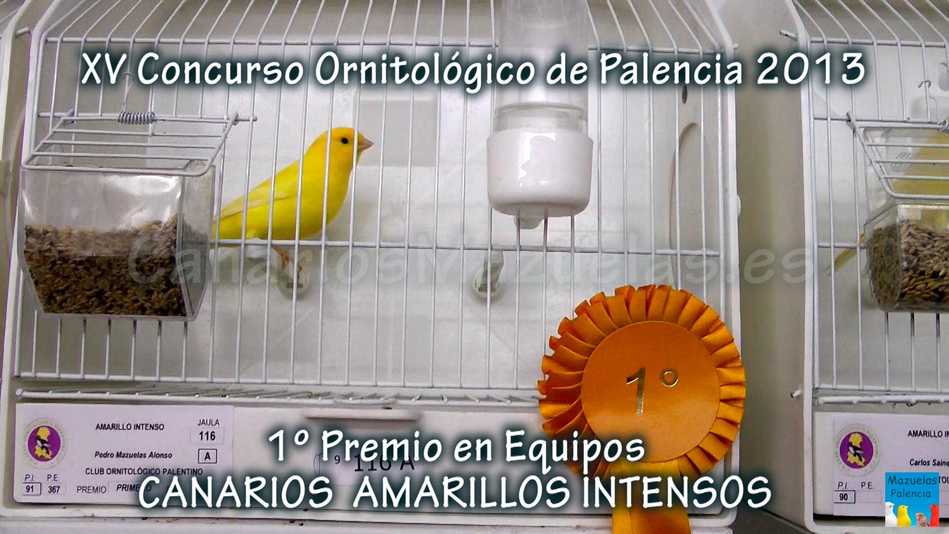 canarios-amarillos-intenso-equipo-campeon
