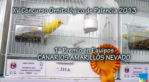 equipo-amarillos-palencia-2013