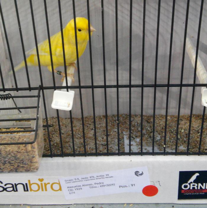 canary-yellow-2014