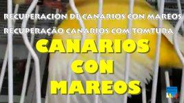 recuperacion-de-canarios-mareados